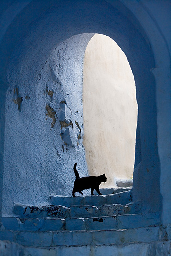 CAT 02 KH0162 01 © Kimball Stock Black Greek Island Cat Walking Up White Stairs Under Arch