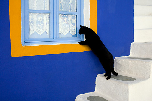 CAT 02 KH0167 01 © Kimball Stock Black Greek Island Cat Standing On White Stairs Looking In Blue And Orange Window