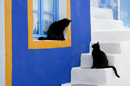CAT 02 KH0169 01 © Kimball Stock Two Black Greek Island Cats Sitting On White Stairs And Sill Of Blue And Orange Window