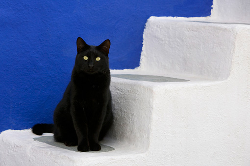 CAT 02 KH0170 01 © Kimball Stock Black Greek Island Cat Sitting On White Stairs By Blue Wall
