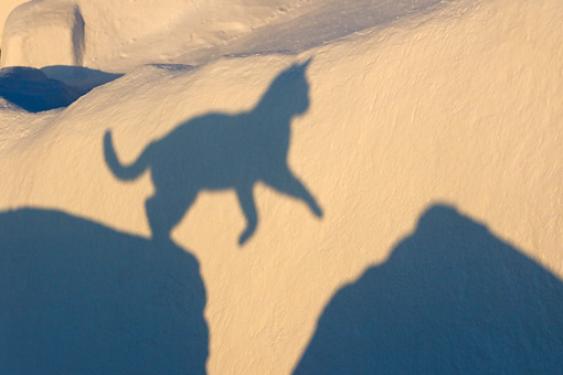CAT 02 KH0172 01 © Kimball Stock Shadow Of Greek Island Cat Jumping Over Gap In Wall