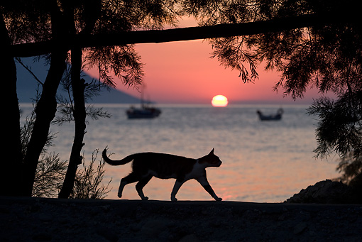 CAT 02 KH0174 01 © Kimball Stock Silhouette Of Greek Island Cat Walking On Beach At Sunset