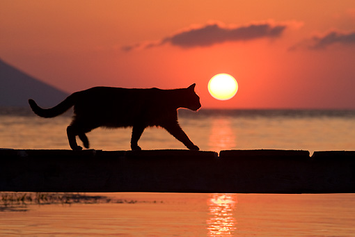 CAT 02 KH0175 01 © Kimball Stock Silhouette Of Greek Island Cat Walking On Dock At Sunset