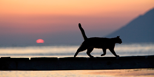 CAT 02 KH0176 01 © Kimball Stock Silhouette Of Greek Island Cat Running On Dock At Sunset