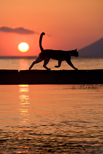 CAT 02 KH0177 01 © Kimball Stock Silhouette Of Greek Island Cat Running On Dock At Sunset