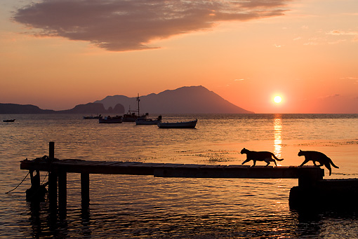 CAT 02 KH0179 01 © Kimball Stock Silhouette Of Greek Island Cats Walking On Dock At Sunset