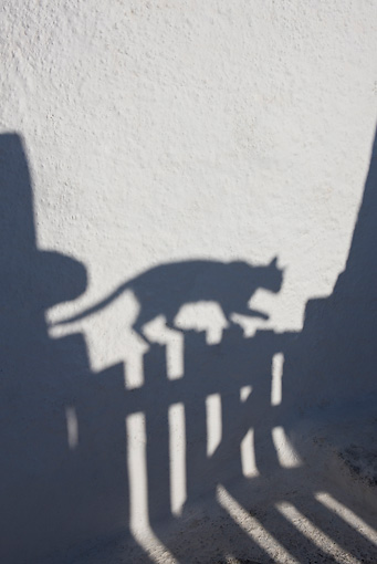 CAT 02 KH0180 01 © Kimball Stock Shadow Of Greek Island Cat Walking On Gate
