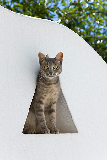 CAT 02 KH0189 01 © Kimball Stock Tabby Greek Island Cat Sitting In Triangle Window In White Garden Wall