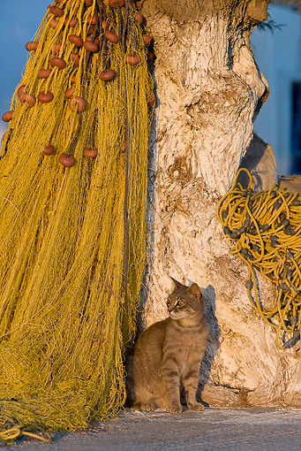 CAT 02 KH0193 01 © Kimball Stock Tabby Greek Island Cat Sitting By Tree And Fishing Net