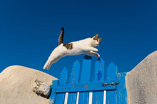 CAT 02 KH0200 01 © Kimball Stock Tabby And White Greek Island Cat Jumping Over Blue Gate
