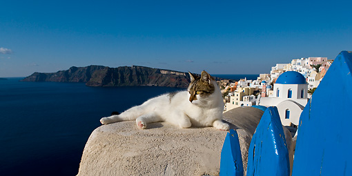 CAT 02 KH0202 01 © Kimball Stock Tabby And White Greek Island Cat Laying On Cement Wall