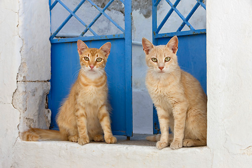 CAT 02 KH0211 01 © Kimball Stock Two Orange Tabby Greek Island Cats Sitting By Blue Door