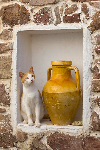 CAT 02 KH0253 01 © Kimball Stock Orange And White Tabby Greek Island Cat Sitting By Vase In Stone Wall