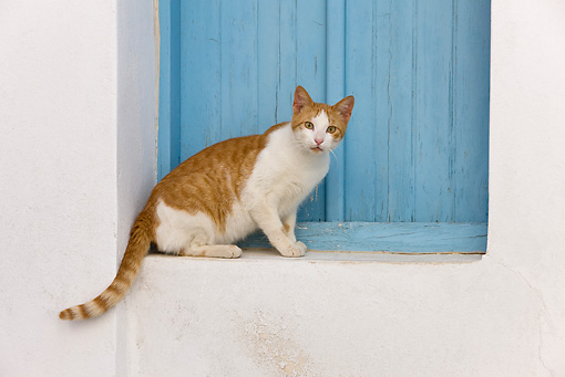 CAT 02 KH0254 01 © Kimball Stock Orange And White Tabby Greek Island Cat Sitting By Blue Window
