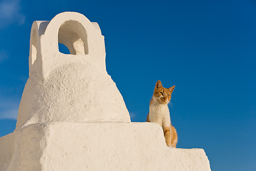 CAT 02 KH0255 01 © Kimball Stock Orange And White Tabby Greek Island Cat Sitting On White Roof By Chimney