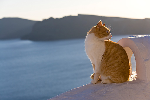 CAT 02 KH0256 01 © Kimball Stock Orange And White Tabby Greek Island Cat Sitting On White Roof By Chimney
