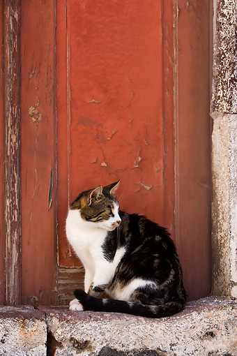 CAT 02 KH0257 01 © Kimball Stock Brown And White Tabby Greek Island Cat Sitting By Red Door