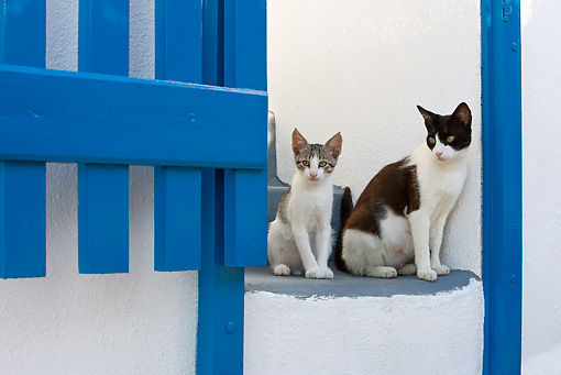 CAT 02 KH0258 01 © Kimball Stock Greek Island Cat And Kitten Sitting On Stairs By Blue Gate