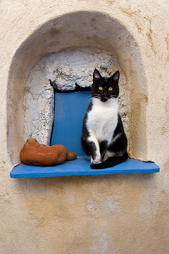 CAT 02 KH0263 01 © Kimball Stock Black And White Greek Island Cat Sitting In Alcove In Wall