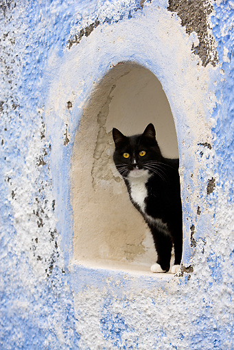 CAT 02 KH0264 01 © Kimball Stock Black And White Greek Island Cat Standing In Alcove In Wall
