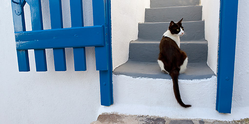CAT 02 KH0267 01 © Kimball Stock Black And White Greek Island Cat Sitting On Stairs By Blue Gate