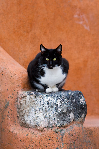 CAT 02 KH0271 01 © Kimball Stock Black And White Greek Island Cat Crouching On Stone In Orange Wall