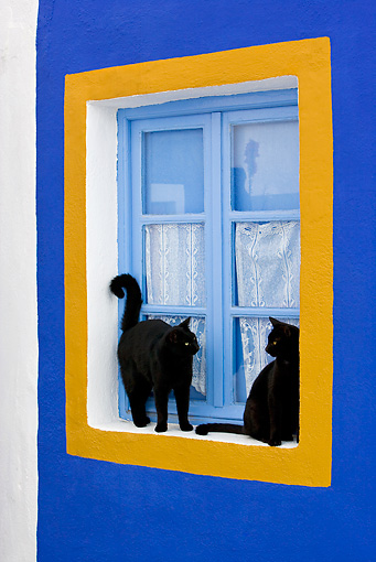 CAT 02 KH0275 01 © Kimball Stock Two Black Greek Island Cats Standing And Sitting By Blue And Orange Window