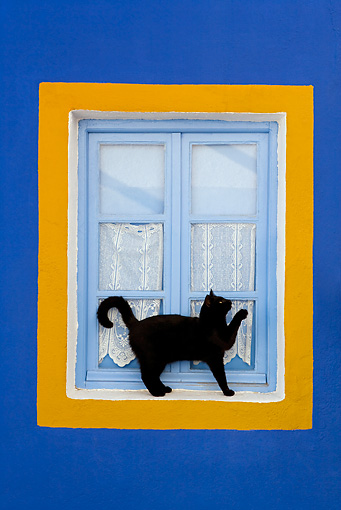CAT 02 KH0276 01 © Kimball Stock Black Greek Island Cat Standing By Blue And Orange Window