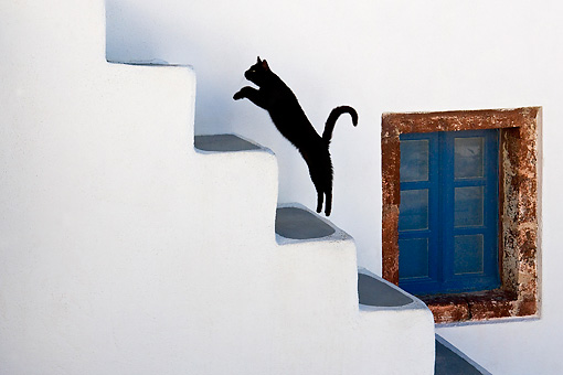 CAT 02 KH0281 01 © Kimball Stock Black Greek Island Cat Jumping Up White Stairs