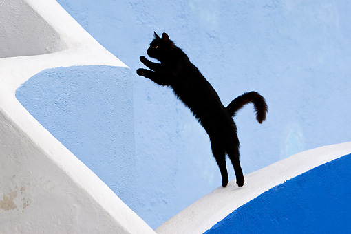 CAT 02 KH0282 01 © Kimball Stock Black Greek Island Cat Jumping On White Wall