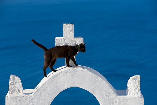 CAT 02 KH0285 01 © Kimball Stock Black Greek Island Cat Walking On White Arch By Ocean
