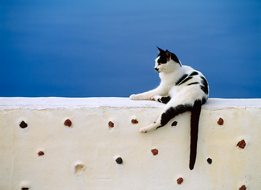 CAT 02 KH0286 01 © Kimball Stock Black And White Greek Island Cat Laying On White Wall