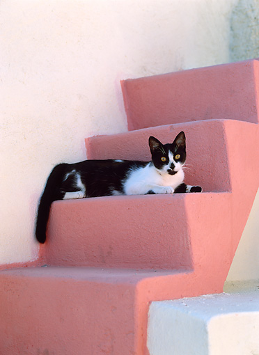 CAT 02 KH0287 01 © Kimball Stock Black And White Greek Island Cat Laying On Pink Stairs