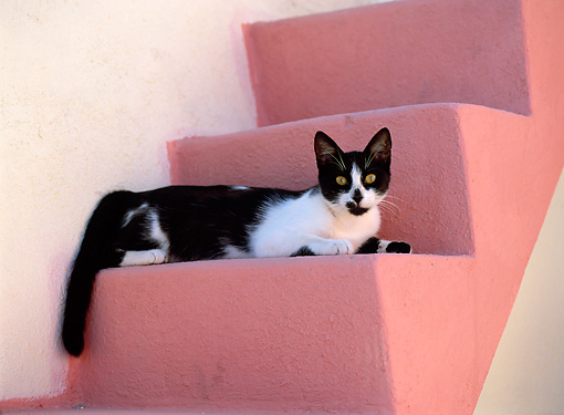 CAT 02 KH0288 01 © Kimball Stock Black And White Greek Island Cat Laying On Pink Stairs