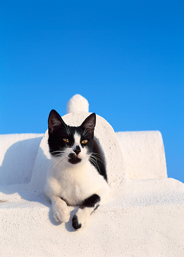 CAT 02 KH0289 01 © Kimball Stock Black And White Greek Island Cat Laying On White Roof