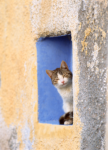 CAT 02 KH0294 01 © Kimball Stock Tabby And White Greek Island Cat Sitting In Alcove In Wall