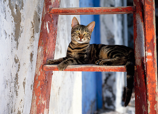 CAT 02 KH0295 01 © Kimball Stock Brown Tabby Greek Island Cat Laying On Red Ladder