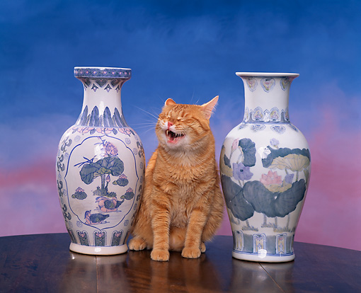 CAT 02 RK0715 10 © Kimball Stock Red Tabby Cat Sitting By Vases Studio