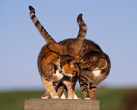 Two Cats Sitting Together On Stone Pedastal