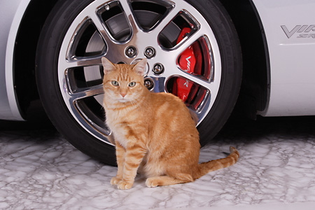 CAT 02 RK1209 01 © Kimball Stock Red Tabby Cat Sitting By Viper Car Tire Studio