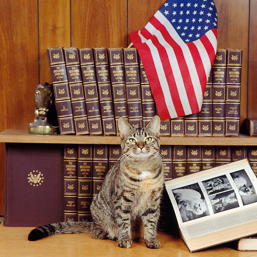 CAT 02 RS0062 01 © Kimball Stock Tabby Cat Sitting By Encyclopedia Books And American Flag