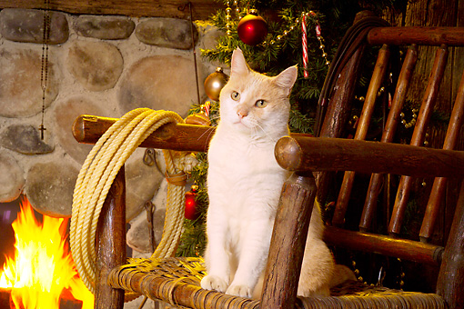 CAT 02 RS0185 01 © Kimball Stock Red And White Tabby Cat Sitting On Chair Beside Fireplace & Christmas Tree