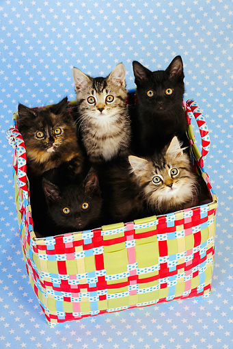 CAT 03 JD0009 01 © Kimball Stock Group Of Kittens Sitting In Colorful Basket