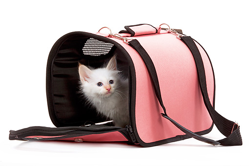CAT 03 JE0009 01 © Kimball Stock Red Point Birman Kitten Sitting In Pink Carrier Seamless