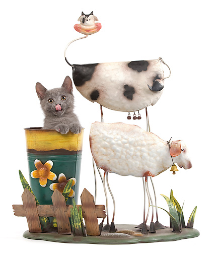 CAT 03 JE0186 01 © Kimball Stock Chartreux Kitten Sitting In Flower Pot By Wire Cow And Sheep On White Seamless