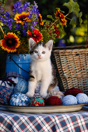 CAT 03 KH0048 01 © Kimball Stock Tabby Kitten Sitting On Yarn Balls On Table By  Flowers And Basket