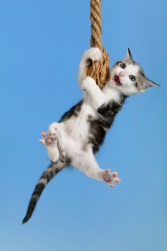 Image result for hanging by a thread cat