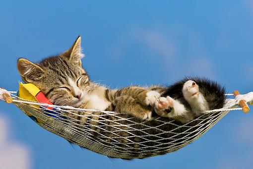 cat 03 kh0322 01    kimball stock tabby kitten sleeping in hammock against blue sky hammock   animal stock photos   kimballstock  rh   kimballstock