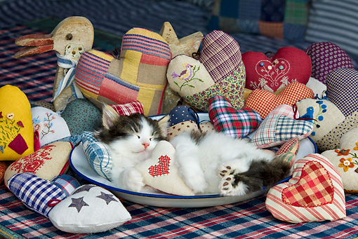 CAT 03 KH0341 01 © Kimball Stock Tabby Kitten Sleeping In Bowl And Pile Of Fabric Hearts
