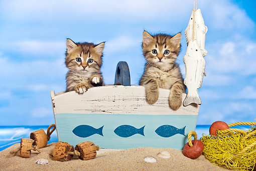CAT 03 KH0453 01 © Kimball Stock Two Tabby Kittens Sitting In Wooden Crate On Beach